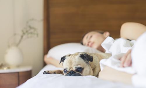 Hund liegt neben schlafender Frau